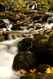 Starvation Creek Falls Landscape, Columbia River Gorge, Oregon Royalty Free Stock Photography