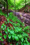 Starved Rock State Park. Lush vegetation grows quickly with spring rains at Starved Rock State Park Stock Images