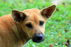 Starving stray dog Royalty Free Stock Images