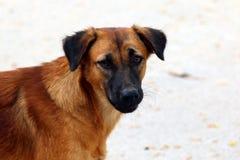 Starving stray dog Stock Photos