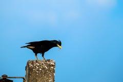 Starvogel auf dem Beitrag Stockfotos