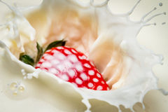 Starwberry close-up splash of milk Royalty Free Stock Images