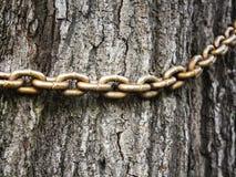 Stary łańcuch na bagażniku stary drzewo, Obrazy Royalty Free