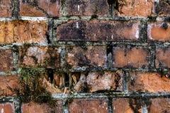 Stary łamający ceglany rozdrabniania ogrodzenie, zakrywający z mech czerwonej cegły tła Abstrakcjonistyczną starą teksturą ściana zdjęcie royalty free