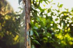 Stary łamający drzwi z odbiciem w okno wystawia grapewine liście które r na antyka domu nostalgiczny obraz stock