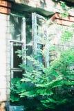 Stary łamający okno przerastający z krzakiem zdjęcie royalty free