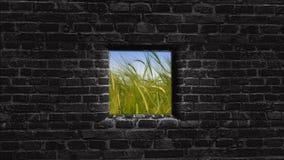 stary ściana okien Za ścianą Jaskrawa przyszłość Fotografia Royalty Free
