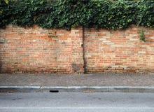 Stary ściana z cegieł z bluszczem na wierzchołku Obraz Stock
