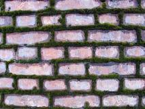 Stary ściana z cegieł przerastający z mech zdjęcie royalty free