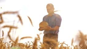 Stary średniorolny mężczyzna piekarz trzyma złotego bochenek w dojrzałym pszenicznym polu i chleb przeciw niebieskiemu niebu zwol zbiory