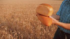 Stary średniorolny mężczyzna piekarz trzyma złotego bochenek w pszenicznym polu i chleb przeciw niebieskiemu niebu zwolnionego te zbiory wideo