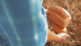 Stary średniorolny mężczyzny piekarz trzyma złotego styl życia bochenek w pszenicznym polu i chleb przeciw niebieskiemu niebu zwo zbiory wideo