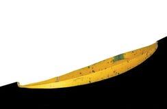 Stary żółty liść odizolowywający Zdjęcia Royalty Free