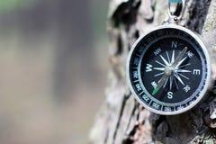 Stary żelazny kompas na drzewie w lesie Zamazywał tło Obraz Stock