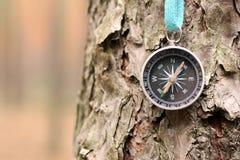Stary żelazny kompas na drzewie w lesie Zamazywał tło dla inskrypci Zdjęcia Stock