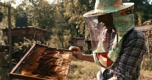 Stary apiarist w kapeluszowej przesłonie sprawdza honeycomb fuul pszczoły Strzelający na CZERWONEJ kamerze 4k materiał filmowy zbiory wideo