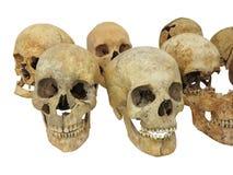 Stary archeologicznego znaleziska czaszki ludzki cranium odizolowywający na bielu Obrazy Royalty Free