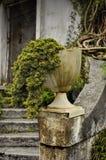Stary autentyczny garnek z roślinami zdjęcie royalty free