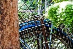 Stary Błękitny bicykl w naturze zdjęcie royalty free