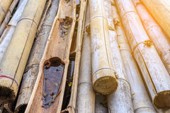 Stary bambus i kija bambus z pomarańczowym skutkiem Fotografia Stock