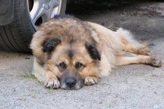 Stary bezdomny smutny miastowy pies obrazy stock