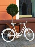 Stary biały bicykl parkujący blisko garnka z zielonym tuya na tle pomarańczowa ściana dom i okno zdjęcie stock