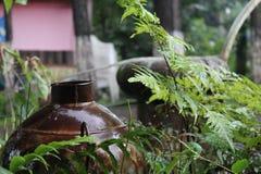 Stary brown naczynie z zielonymi liśćmi w przodzie Zdjęcie Royalty Free