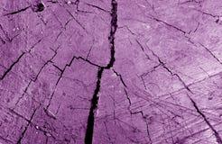 Stary brudny drzewa cięcie w w górę purpur tonuje zdjęcia stock