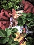 stary brudny rocznika dziecko czerwony tło straszny - lala z przerażającym strasznym niebieskim okiem gapi się przez laves i rośl zdjęcie royalty free
