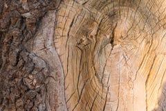 Stary cięcie karcz stary drzewo z barkentyną jako tekstura Tło zdjęcie royalty free
