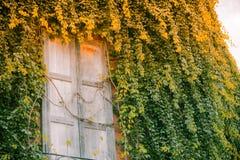 stary ściana okien Obraz Stock