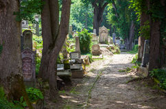 Stary cmentarniany las Zdjęcia Stock