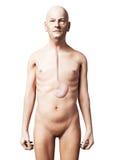 Stary człowiek - żołądek Fotografia Stock