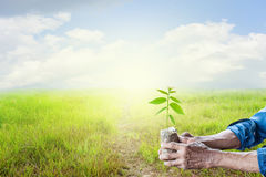 Stary człowiek ręki trzyma zielonej młodej rośliny z zielonej trawy nieba półdupkami Zdjęcie Royalty Free