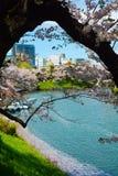 Stary czereśniowy drzewo tworzy naturalną ramę dla pokojowego wiosna widoku Chidorigafuchi fosa w Tokio, Japonia Obrazy Royalty Free