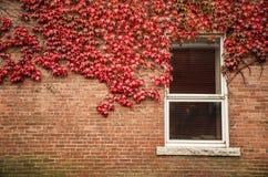 Stary czerwony ściana z cegieł z drewnianym okno Zdjęcia Royalty Free