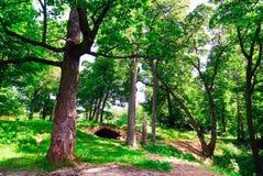 Stary dąb w parku na tle stary most obraz royalty free