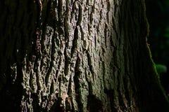 Stary dębowy drzewnej barkentyny tekstury zbliżenie Zdjęcie Stock