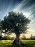 Stary dębowy drzewo przeciw dramatycznemu niebu Zdjęcia Stock