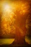 Stary dębowy drzewo Zdjęcia Stock