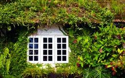 Stary dom przerastający z pięknymi roślinami i kwiatami cameron średniogórza Malaysia fotografia stock