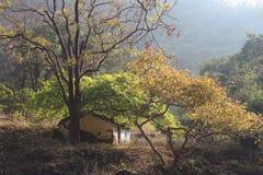 Stary dom w lesie Obrazy Royalty Free