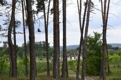 Stary dom w sosnowym lesie Zdjęcia Stock