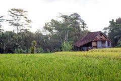 Stary dom z przyrost zieleni ryż polem zdjęcia royalty free