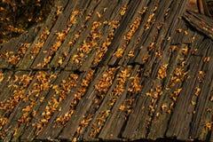 Stary drewniany dach zakrywający z żółtymi liśćmi Zdjęcie Stock