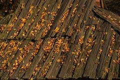 Stary drewniany dach zakrywający z żółtymi liśćmi Fotografia Royalty Free