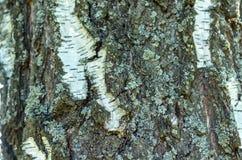 Stary Drewniany Drzewny tekstury t?o zdjęcia stock