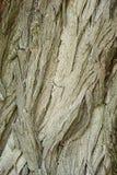Stary Drewniany Drzewny tekstury tła wzór Obrazy Stock
