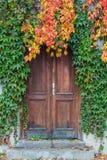 Stary drewniany drzwi przerastający z bluszczem w spadku barwi zdjęcie royalty free