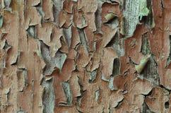 Stary drewniany malujący nieociosany tło, farby obieranie Zdjęcia Stock